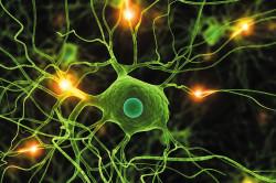 Проблемы нервной системы - причина развития гипергидроза