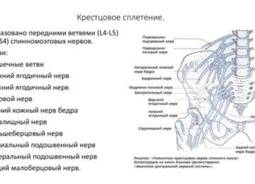 Анатомия и патологии крестцового сплетения