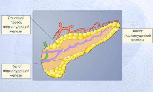 Заболеванию поджелудочной свойственно очень быстрое изменение тканей, вплоть до некроза