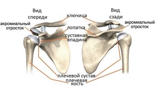 Как работает человеческое плечо?