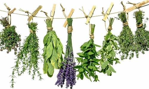 Лечение недуга травами и растениями