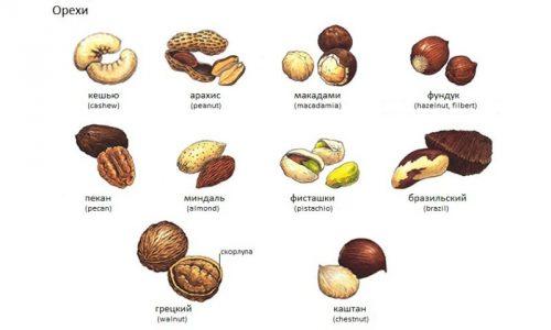 Больным с панкреатитом можно употреблять не все виды орехов