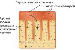 Процесс всасывания питательных веществ в тонком кишечнике