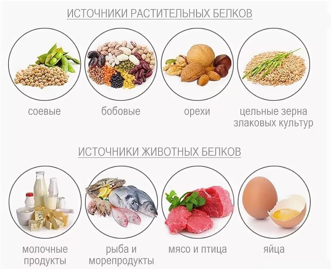 Источники животных и растительных белков